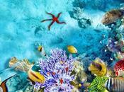 Achieve Banana Reef Maldives
