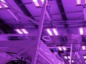 In-depth Analysis Grow Lights