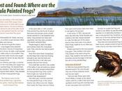 LOST FOUND: WHERE HULA PAINTED FROGS? Article Touchdown Magazine