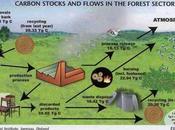 Pressing Need Afforestation