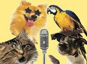 American (And Japanese) Pets Talent Videos