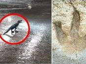 Creepy Mysteries: Dinosaurs Indonesia