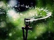 Many Sprinkler Heads Zone?