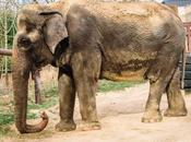 Ambika Elephant Gifted India Euthanised Smithsonian
