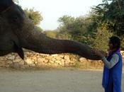 Enjoying Elephant Experience Jaipur