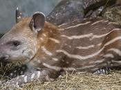 April 27th Special Days Featuring Tapir Freebies!