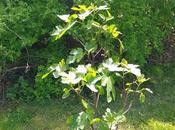 Tree Grows In..My Backyard