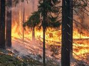Inquiry Evidence Suggests Extreme Bushfire Season Australia Predicted Earlier Occur Again