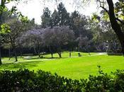 UCLA SCULPTURE GARDEN: Fresh Museum Middle Angeles