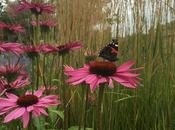 Quick English Garden Tour June
