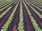 Commercial Farming: Characteristics, Advantages, Types Examples