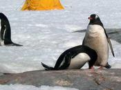 'Hooligan' Penguins Disgust Polar Explorer with Aberrant Sexual Habits