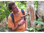 Wonder Wonders… Fungi Amazon Rainforest That Degrades Common Polyurethane Plastic.