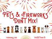 Firework Safety: Keep Your Safe Canada