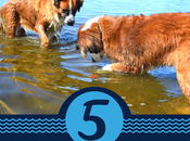 Five Friday: Best Water Play Toys Dogs #FridayFive