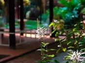 Things Need Know Before Hiring Landscaping Designer