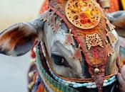 Kundri Mela, Display Jharkhand's Vibrant Culture Traditions