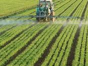 Chemical Fertilizers Cause Water Pollution?