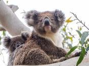Should Visit Hanson Wildlife Sanctuary?