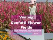 Confetti Flower Field Wick, Pershore August 2020