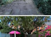 Gravel Patio Amelia's Garden Transformation Budget