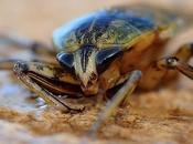 Pests Orlando What Them