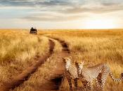 Plan Perfect African Safari