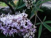 From Menopause: Vitex Your Next Best Friend