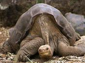 Lonesome George Dead