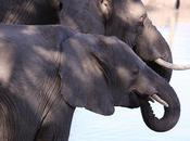 Gabon Committed Ending Wildlife Crimes
