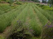 Sensory Visit Aroma Park Montseny, Spain