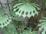 Amazing Plants With Weird Unusual Leaves