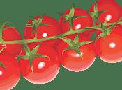 Calender Tomato Growing Season