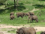 Superb Botswana Safari Guide