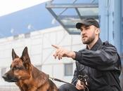 When Should Choose Security Guard With Solution?