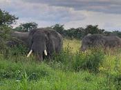 Returning Elephants Have Stunning Impact Africa's Virunga National Park