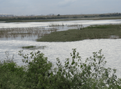 Photoessay: Birds Bettakote Lake, Devanahalli, Karnataka