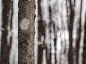 Walking (and Skiing Snowshoeing) Winter Wonderland