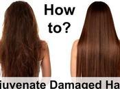 Rejuvenate Damaged Hair?