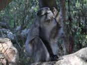 Primate Predator Project Annual Report 2020