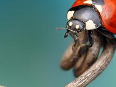 POPUMON, Ondrej Pakan, Murat Yilmaz Insect Photography