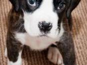Raise Puppy