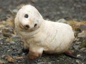 Bird Killing Seal Pups Along England Coast