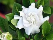 Costliest Flower from Garden Though