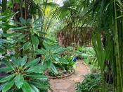 Jungle Musing