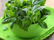 Essential Kitchen Herbs Grow Your Windowsill