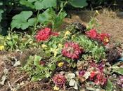Compost Flowers? (And Dead Flowers Too?)