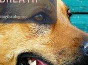 Ways Treat Breath Naturally