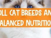 About Ragdoll Breeds Foods Balanced Nutrition