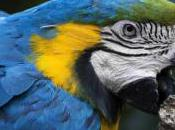 Tame Aggressive Bird